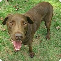 Adopt A Pet :: Murphy - Temple, GA