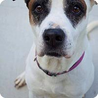Adopt A Pet :: Pearl - Prince George, VA