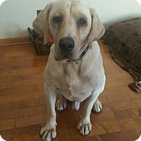 Adopt A Pet :: Izzy - Princeton, MN