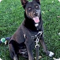 Adopt A Pet :: Kora beauty - Redding, CA