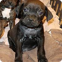 Adopt A Pet :: Zander - Rockingham, NH