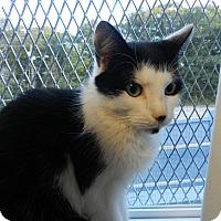 Adopt A Pet :: Einstein - Plainville, MA