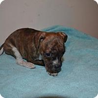 Adopt A Pet :: Sleepy - Winder, GA