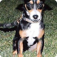 Adopt A Pet :: Mistletoe - Palo Alto, CA