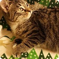 Adopt A Pet :: Paul - Ortonville, MI