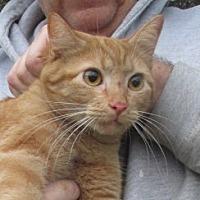 Adopt A Pet :: Freddie - Germantown, MD