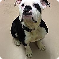 Adopt A Pet :: Oreo - Battle Creek, MI