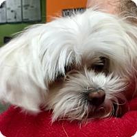 Adopt A Pet :: Lucky Lou - Oswego, IL