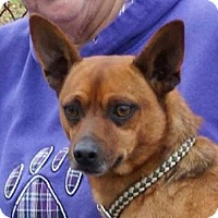 Adopt A Pet :: ODIE!! - Mastic Beach, NY