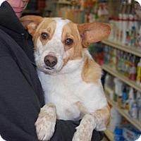 Adopt A Pet :: Eli - Brooklyn, NY