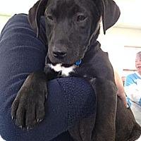 Adopt A Pet :: Bubbles - Oak Brook, IL