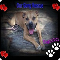 Adopt A Pet :: Diego - Cincinnati, OH
