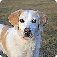 Adopt A Pet :: Zoe - Cheyenne, WY