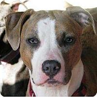 Adopt A Pet :: Maisy - Reisterstown, MD