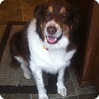 Adopt A Pet :: Rusty - Washington, IL