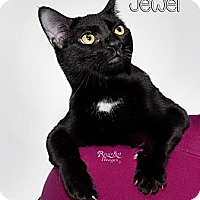 Adopt A Pet :: Jewel - 4941B - Fort Mill, SC