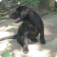 Adopt A Pet :: Theodore - Portland, ME