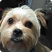 Adopt A Pet :: Professor - San Diego, CA