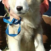Adopt A Pet :: Zuzu - Staunton, VA
