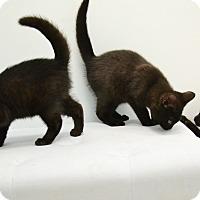 Adopt A Pet :: Binx, Billy & Winnie - Brooklyn, NY