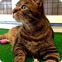 Adopt A Pet :: Scooter - Novato, CA