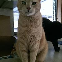 Adopt A Pet :: Leo - Bonita Springs, FL