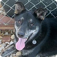 Adopt A Pet :: Eponine (Eppie) - Waco, TX