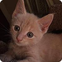 Adopt A Pet :: Elizabeth - Monterey, VA