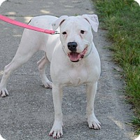 Adopt A Pet :: Karly-Foster needed! - Detroit, MI