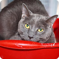 Adopt A Pet :: Smokey Joe - Washburn, MO