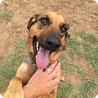 German Shepherd Dog Mix Dog for adoption in Woodward, Oklahoma - Sister