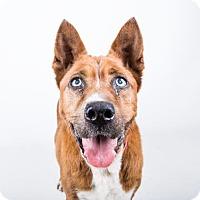 Adopt A Pet :: Yosemite - Adrian, MI