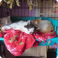 Adopt A Pet :: Boat Basin 3 - Coos Bay, OR