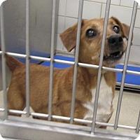 Adopt A Pet :: Brandon - North Richland Hills, TX