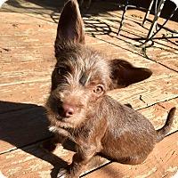 Adopt A Pet :: Juliet - Santa Ana, CA
