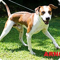 Adopt A Pet :: Arnold - Broadway, NJ