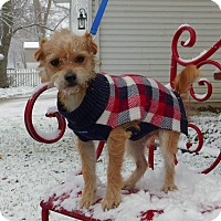 Adopt A Pet :: Franky - Fort Atkinson, WI