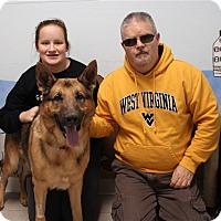 Adopt A Pet :: Sarge - Elyria, OH