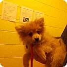 Adopt A Pet :: JAXX