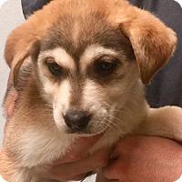 Adopt A Pet :: Sno Dogs