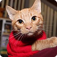 Adopt A Pet :: Butternut - Media, PA