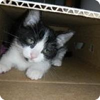 Adopt A Pet :: Tip - Huffman, TX