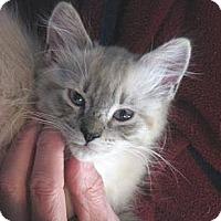 Adopt A Pet :: Finn-a-Lei McCutsey - Davis, CA