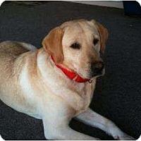 Adopt A Pet :: Brody - Altmonte Springs, FL