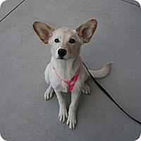 Adopt A Pet :: Sarah - Gilbert, AZ