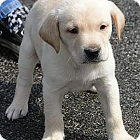Adopt A Pet :: Jill - Columbus, IN