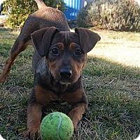 Adopt A Pet :: Trudy - San Francisco, CA