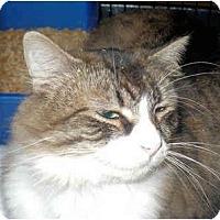 Adopt A Pet :: Tonks - Colmar, PA