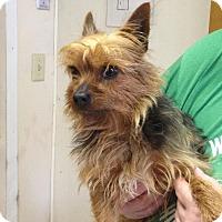 Adopt A Pet :: Drake - Carey, OH