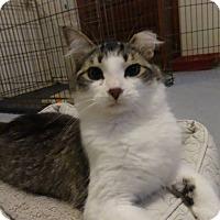 Adopt A Pet :: Sweet Pea - Colmar, PA